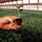 seedling_small